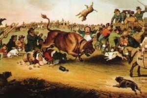 Bull_running