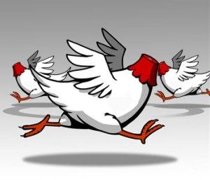 headless-chickens