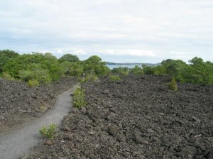 Lava field with path and encroaching vegetation. Note that despite appearances this is loose rock, not ploughed-up soil. ~ By Nevilley at the English language Wikipedia