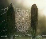 Dewy Cobweb ~ by Norman Hyett