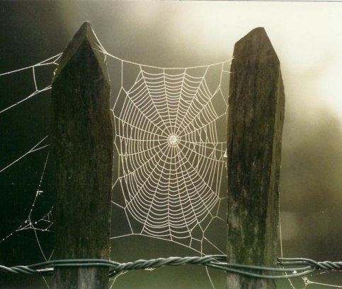 Dewy Cobweb ~ by Norman Hyett