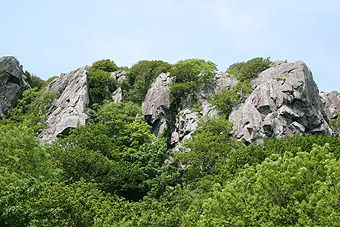 There's a crag in there somewhere! Craig Bwlch y Moch poking up out of a dense forest of rampant vegetation above Tremadog. Photo: Al Leary