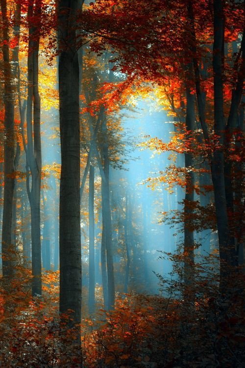 Autumn Forest (via whispering-n-winds)